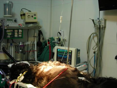 Preparación del paciente para la cirugía