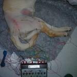 Rehabilitación mediante electroestimulación